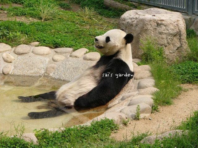 温泉パンダ
